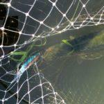Ловля щуки и окуня спиннингом на местном озере в середине августа 2021 года