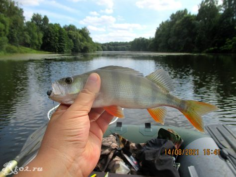 очередной окунек на 3фг на местном озере