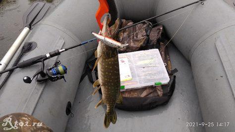 пятая щука поймана на китайский  Jackall Squad Minnow 95 от BearKing на озере 25 сентября