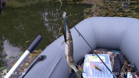 Щучка на копию Slender Pointer на озере 5 сентября